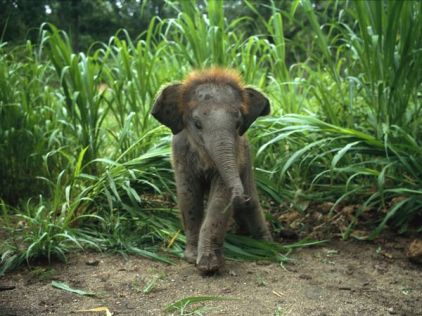 baby-asian-elephant_227_600x4501